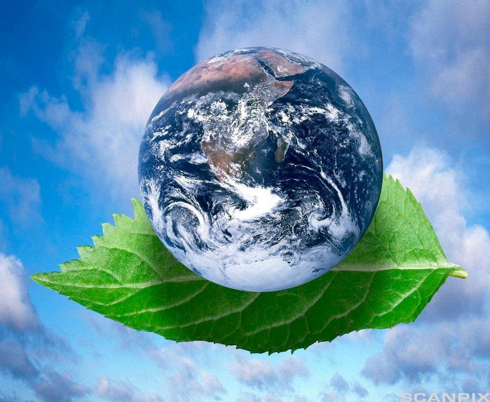 Blue sky, green leaf and planet Earth. Photomontage.