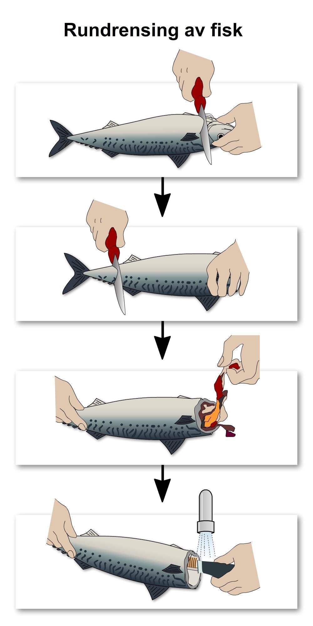 Rundrensing av fisk