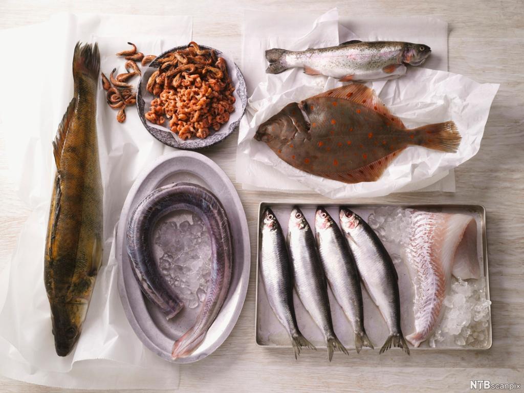 Forskjellige fiskeslag og en skål med reker. Foto.