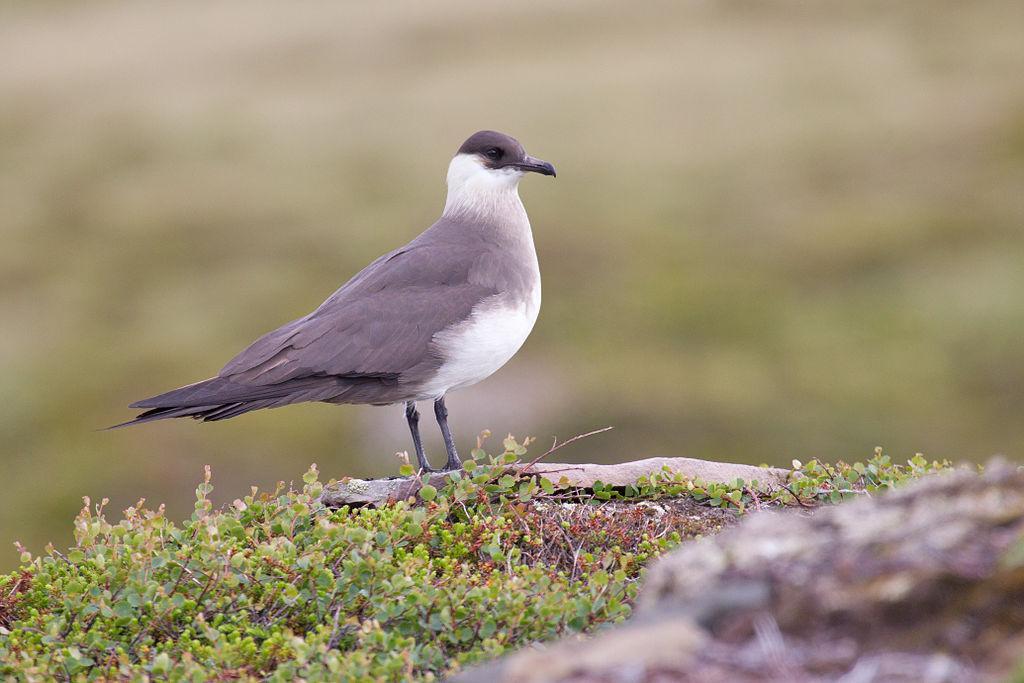 Fugl sitter på bakken. Foto.
