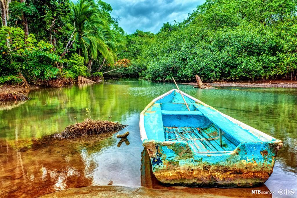 Blå robåt ved elvebredd