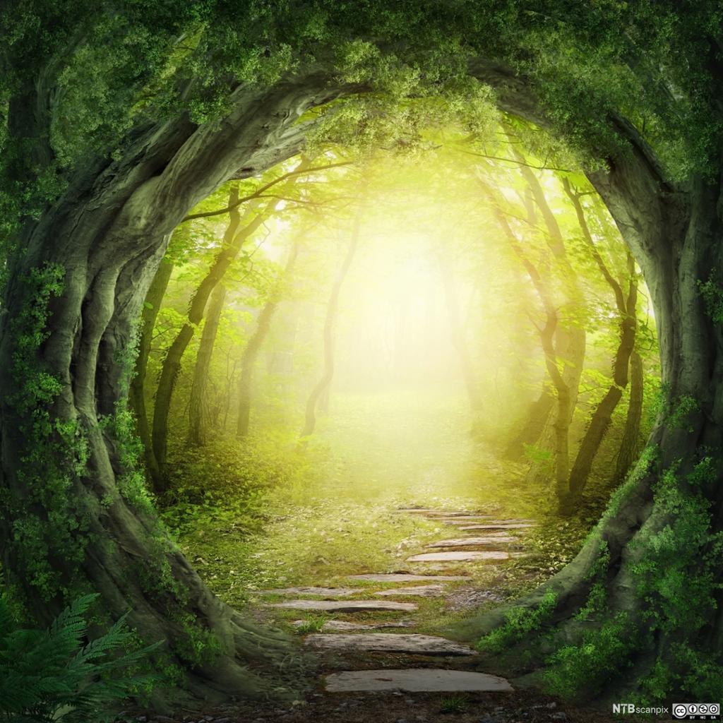 Lysning i skogen. Illustrasjon.