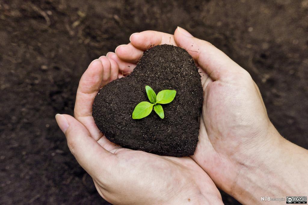 Hender som holder jord formet som et hjerte. En grønn spire kommer opp av jorda. Foto.