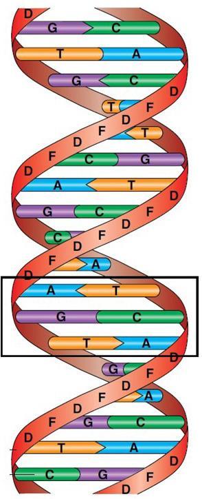 DNA tegnet som en vridd taustige. Illustasjon.