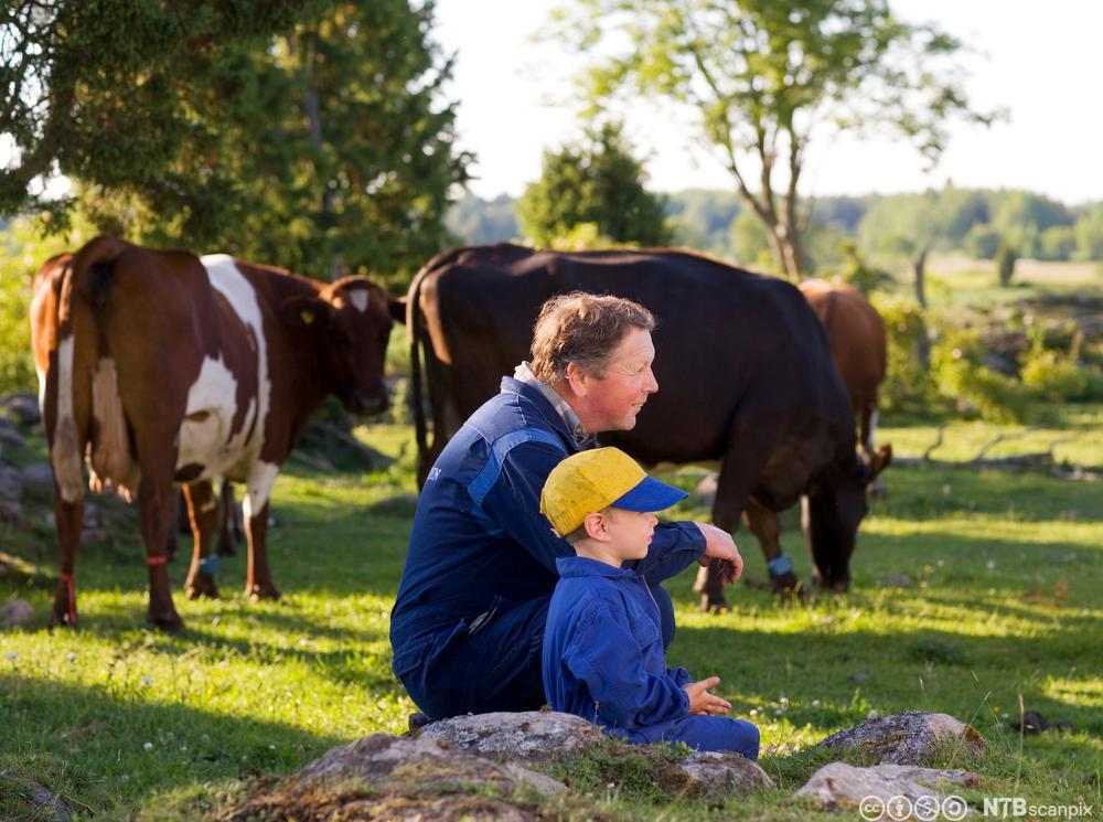 Gutt og mann med kyr. Foto.