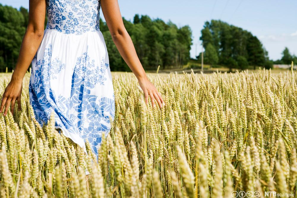 En dame, som er kledd i en kjole, går i en kornåker. Foto.