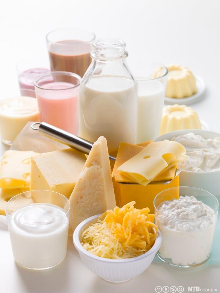 Et utvalg av melkeprodukter. Foto.