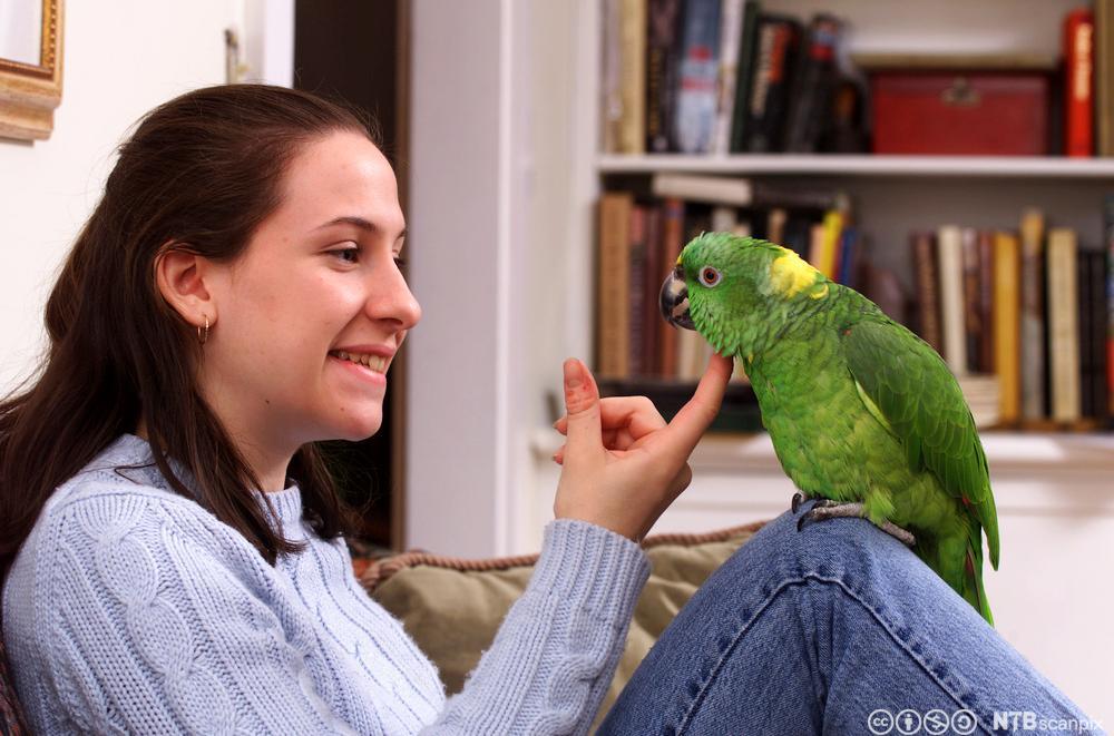 Jente med papegøye. Foto.