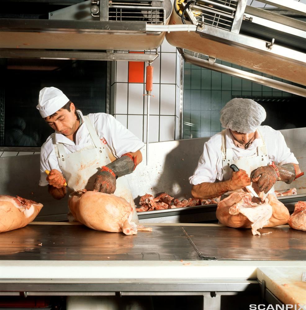 To kjøttskjærere skjærer ut gris. Foto.