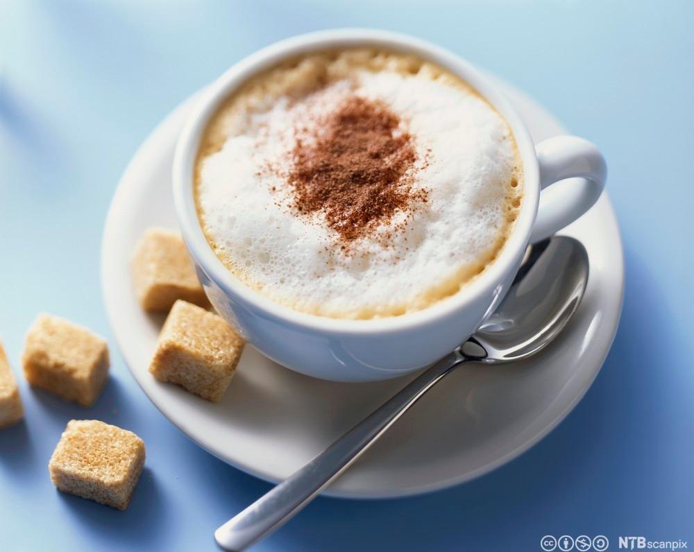 Kopp cappuccino med kaneldryss. Foto