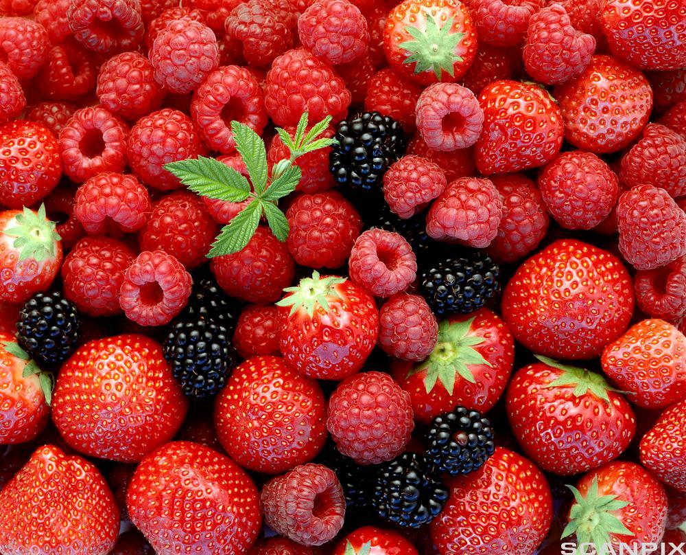 Friske bær i en haug. Foto.