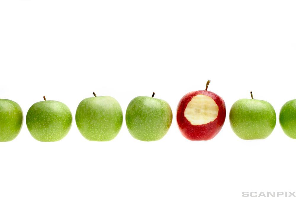 Epler på rad. Fire grønne og et rødt det er spist av. foto.