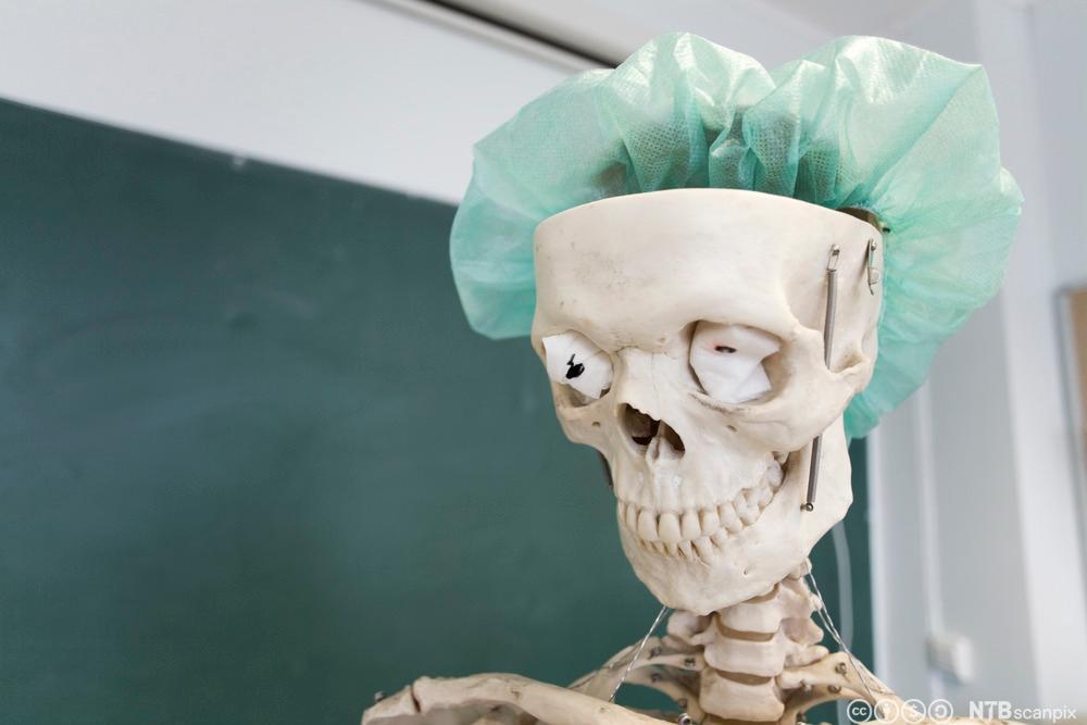 Skjelett i klasserom. Foto.