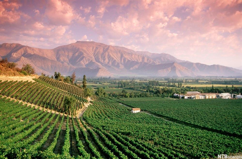 bilde av vinmarker og vingård