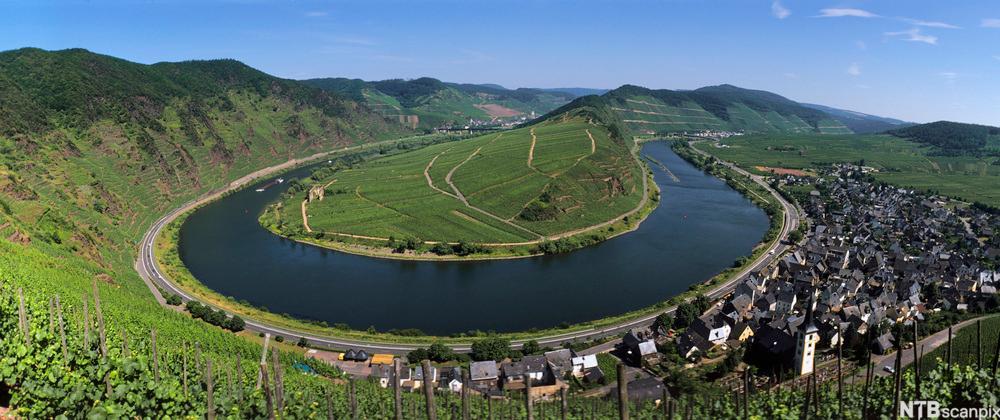 Europas bratteste vingård ligger i Tyskland.