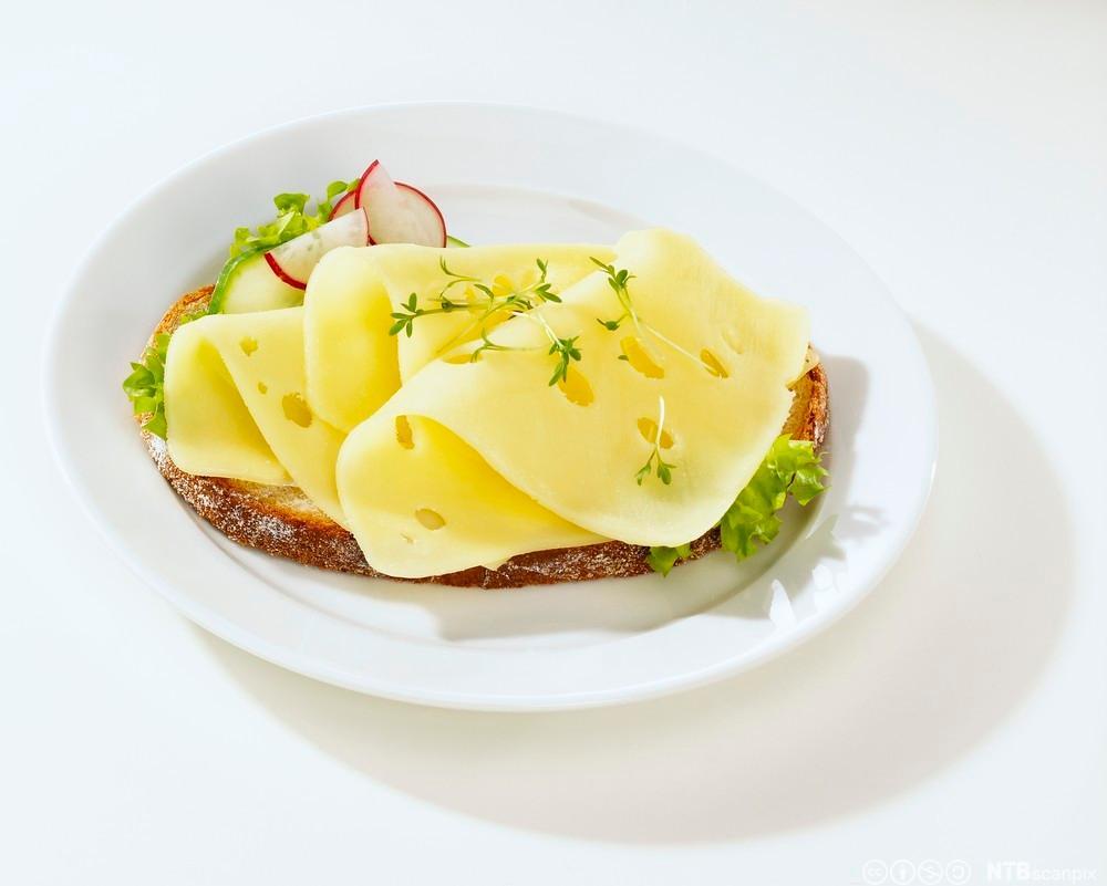 Brødskive med ost. Foto.