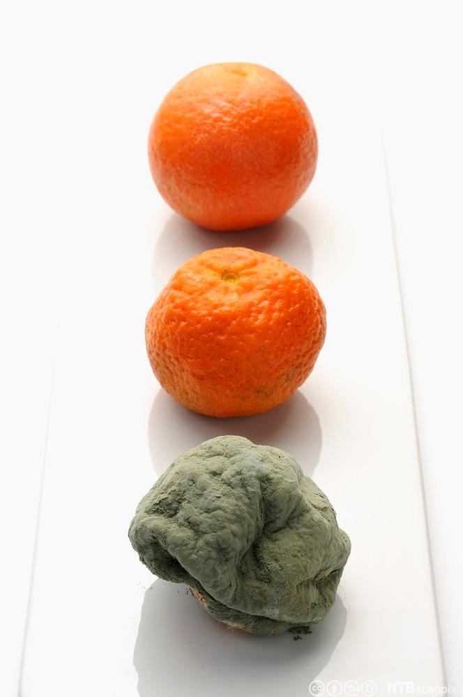 Bilde av tre appelsiner av ulik kvalitet
