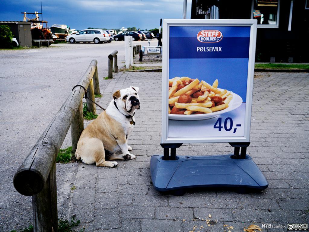 Bilde av en plakat med salg på marsvin.