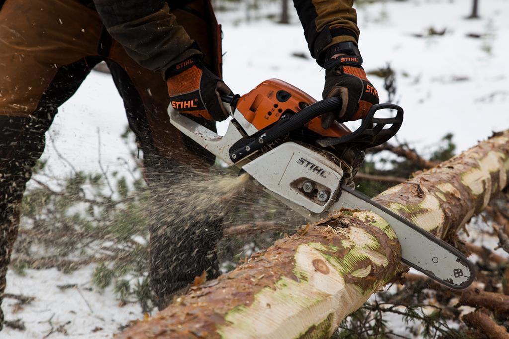 En tømmerstokk som kappes med motorsag. Foto.