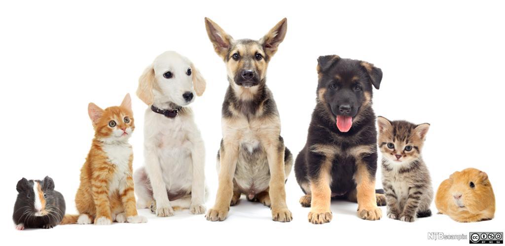 Forskjellige kjæledyr sitter på rekke. foto.