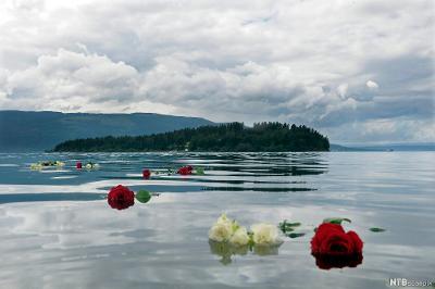 Fotografi som viser Utøya, ei lita øy i Tyrifjorden. Over hele øya vokser det grantrær. På det stille vannet flyter det røde og hvite roser.