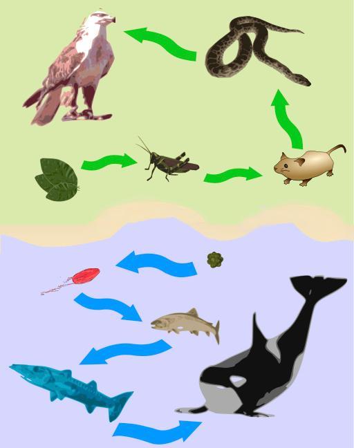 Dyr og planter forbundet med piler. Illustrasjon.
