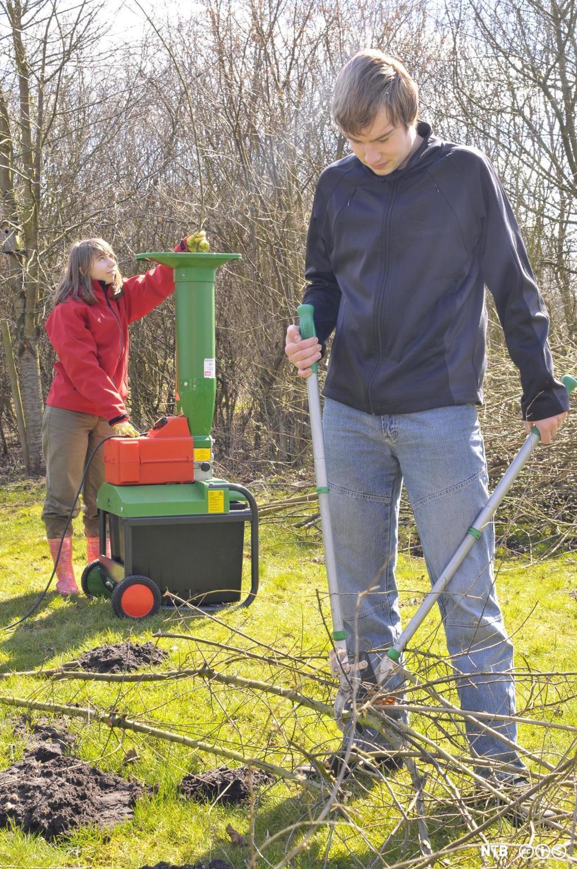 To ungdommer, en gutt og ei jente, som gjør hagearbeid. Gutten klipper kvister med greinsaks, og jenta putter kvister i kvistkvern. Foto.
