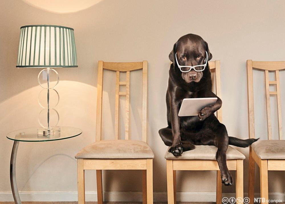 Hund med briller og lesebrett. Foto.