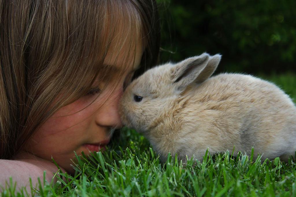 Jente som koser med en kanin. Foto.