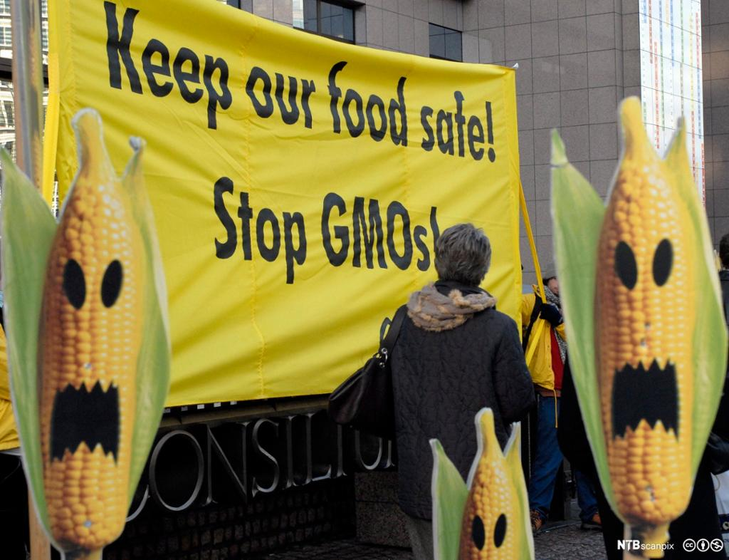 Banner med protest mot GMO-mais. Foto.