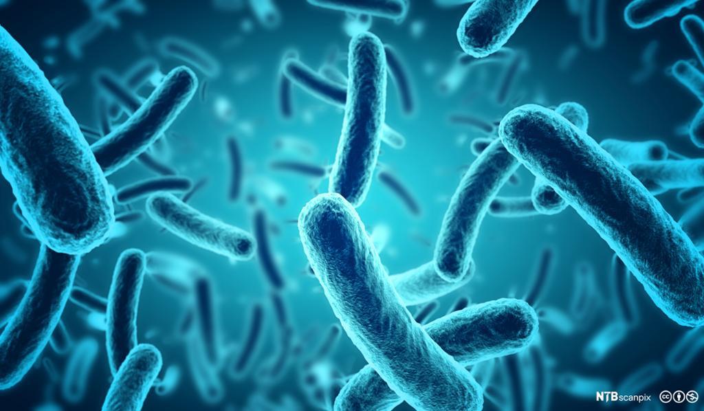 Modell av bakterier. Illustrasjon.