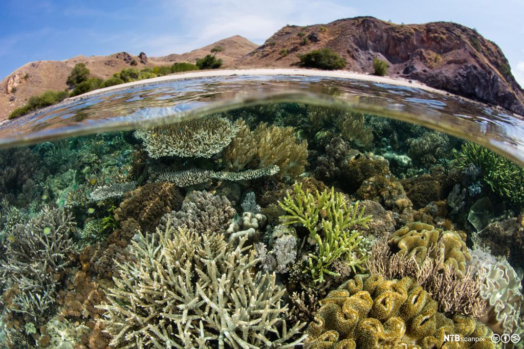 Korallrev i vannskorpa. Foto.