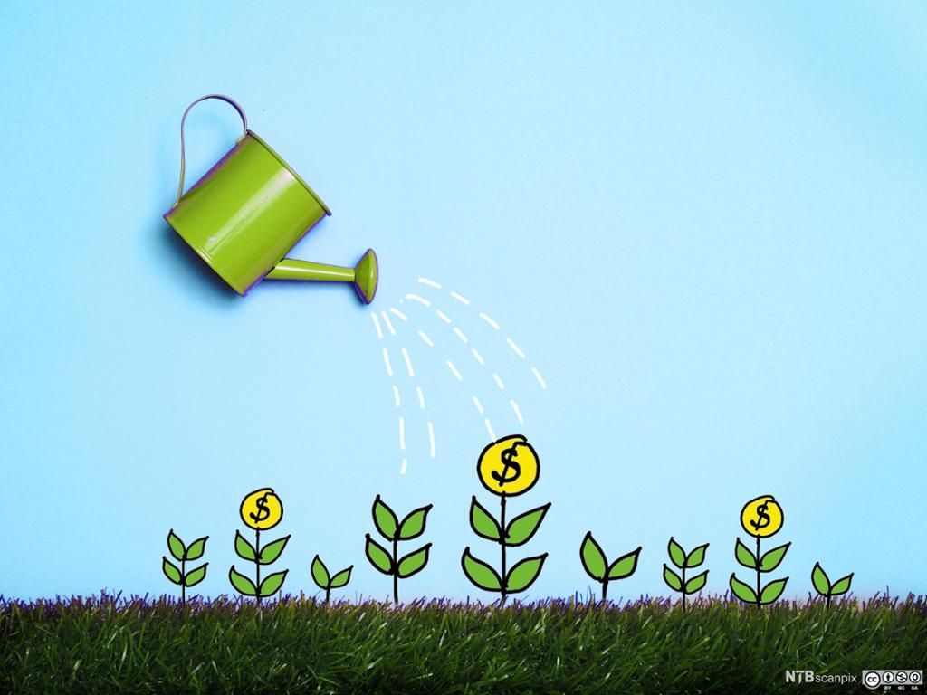 Bilde av en plante med dollarsedler.