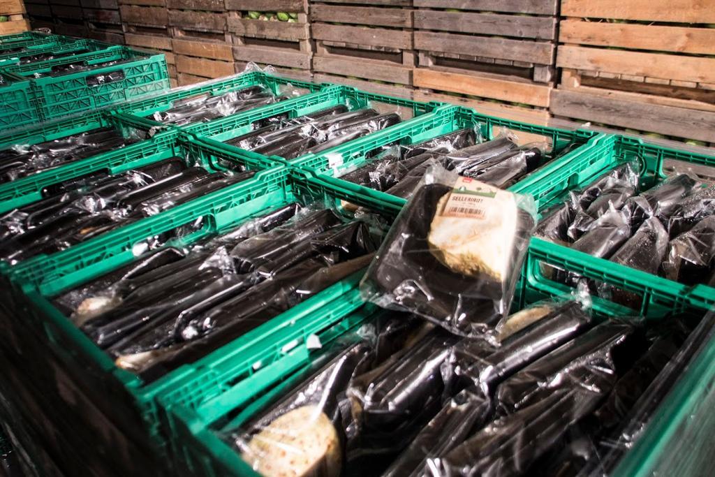 Rader med grønnsakskasser. Foto.