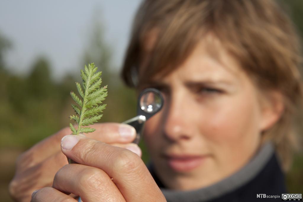 En ung kvinne ser på en plante i et forstørrelsesglass. Foto.