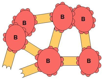 Tegning av røde blodceller og antistoff.