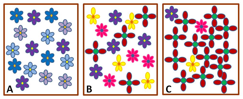 Tre rammer A, B og C, som inneholder ulike blomstertyper. Illustrasjon.