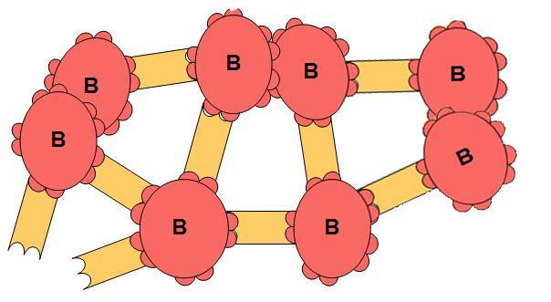 Skjematisk tegning av blodlegemer og antistoff som har klumpet seg sammen. Illustrasjon.