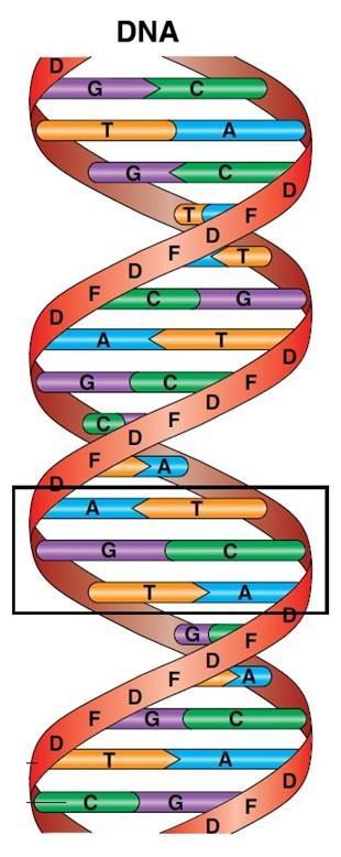 DNA-stige. Illustrasjon.