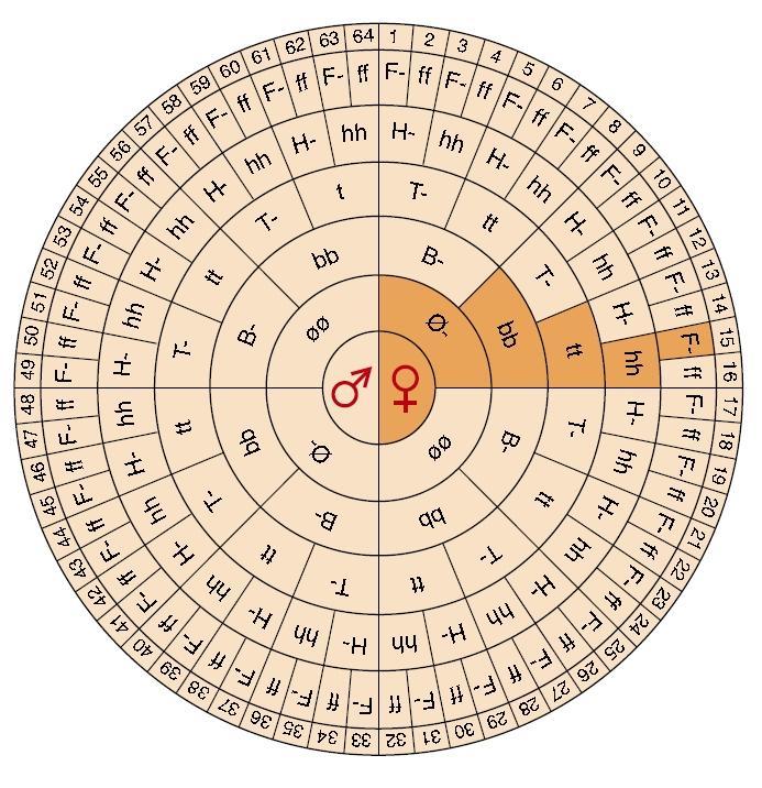Sirkulær tabell med bokstavkombinasjoner. Grafikk.