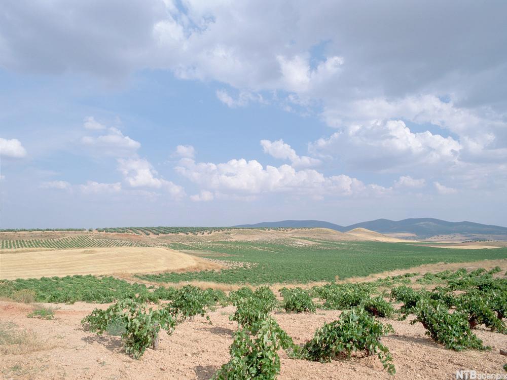 Tørt landskap i Castilla-La Mancha.foto.