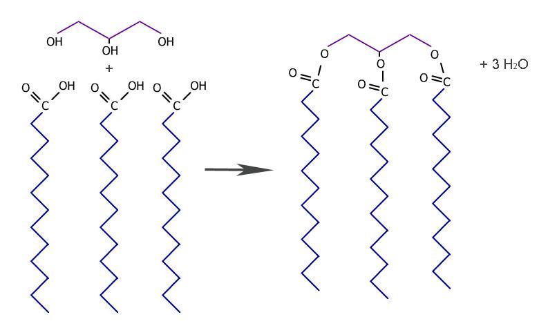 Fettmolekyl. Illustrasjon.