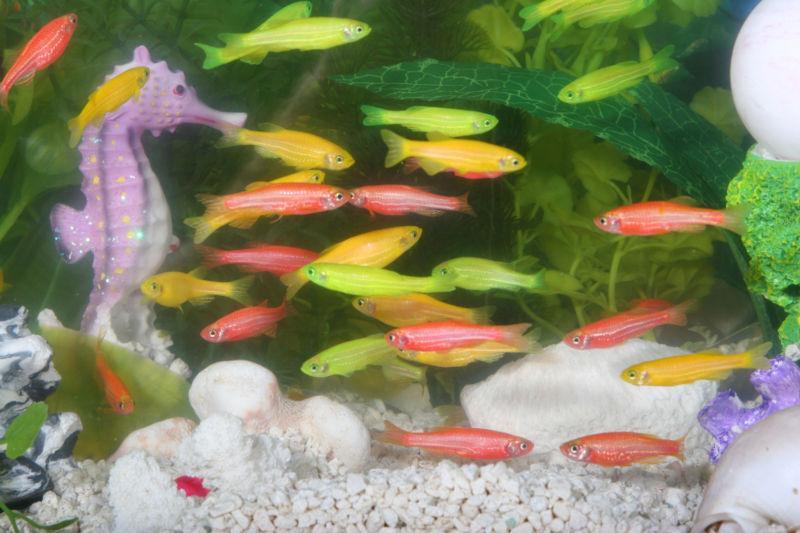 Akvarium. Foto.