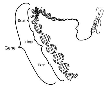 Utsnitt av DNA. Illustrasjon.