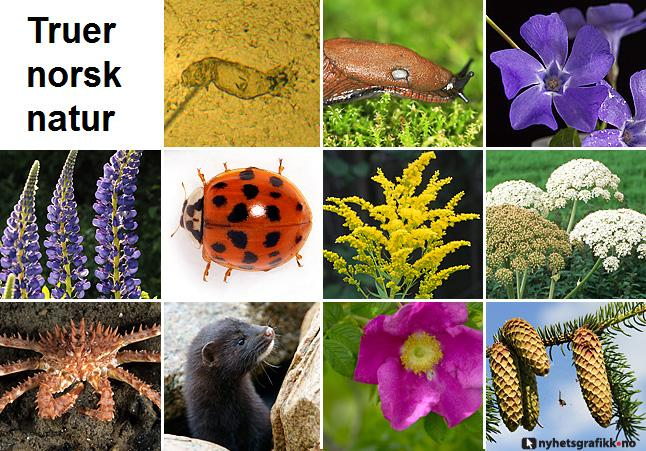 Collage av arter som truer norsknatur