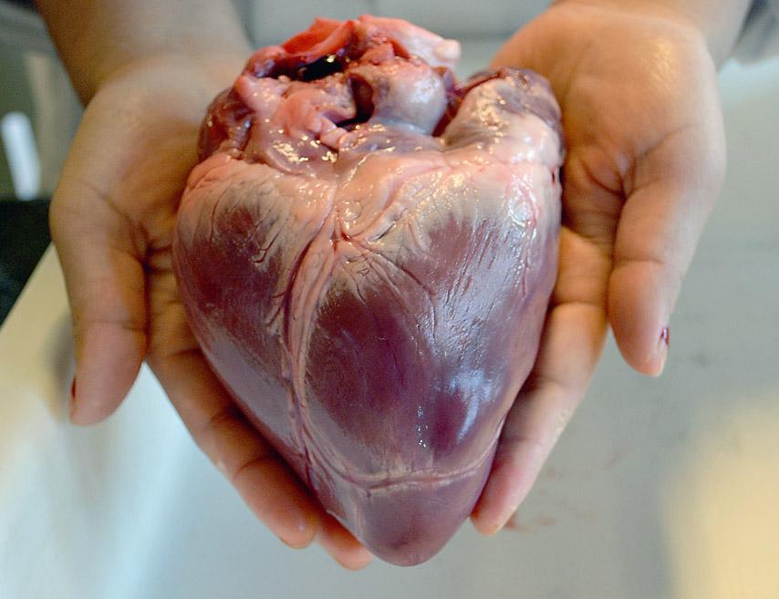 Et hjerte holdt av to hender. Foto.