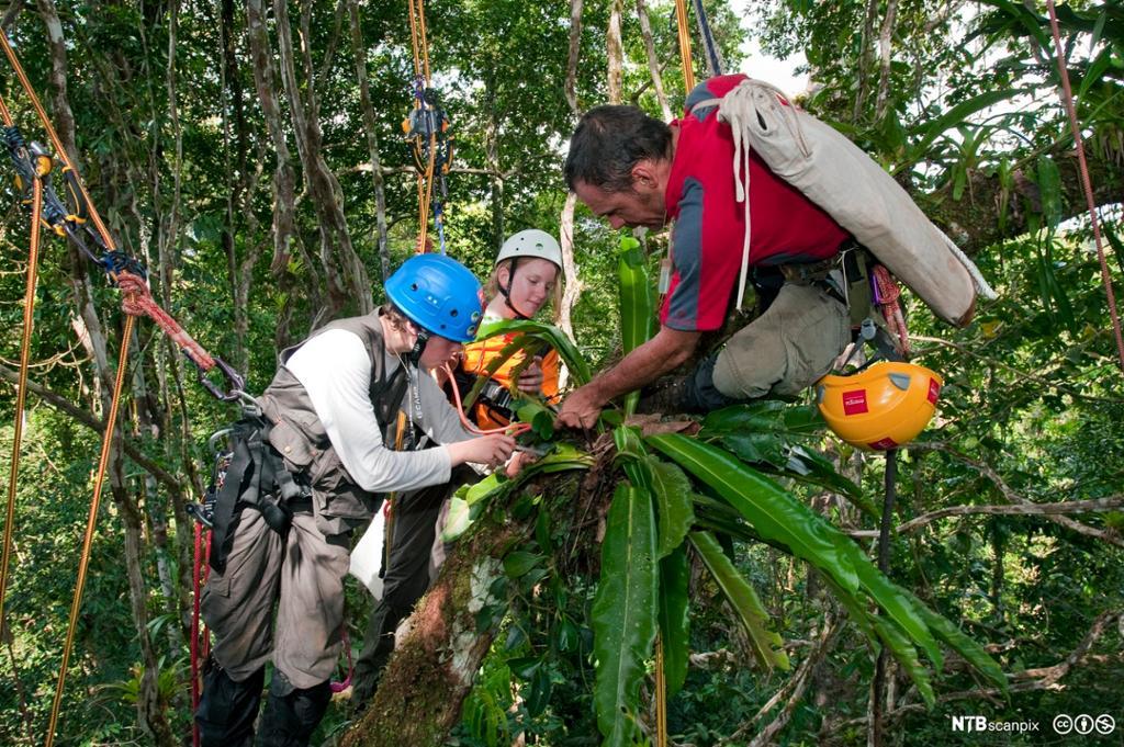 Forskere samler inn prøver i regnskog. Foto.