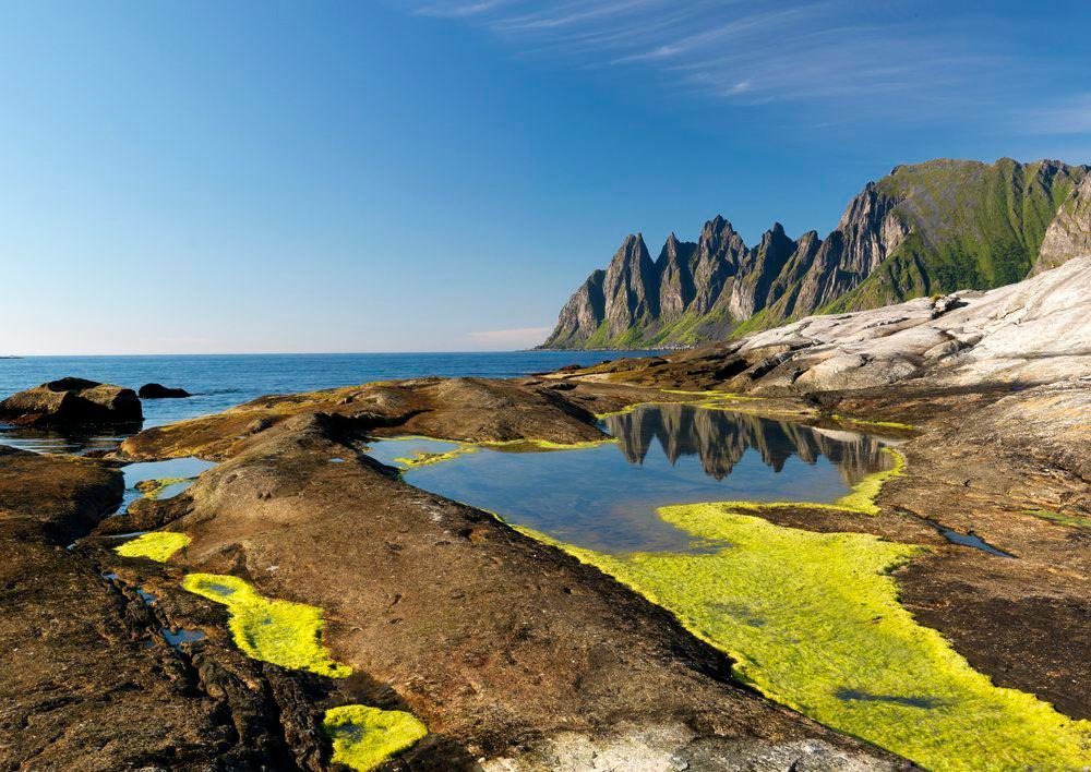 Kystlandskap med algevekst i brakkvann. Foto.