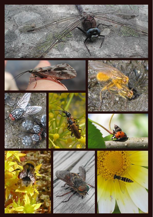 Mange insekter i fotomontasje.