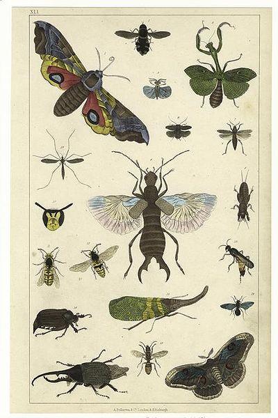 Gammel plakat med insekter. Illustrasjon